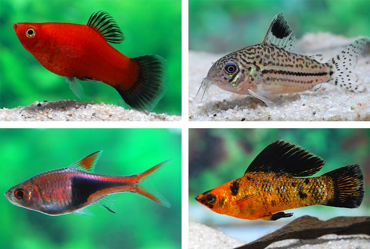 Fische F 252 R Anf 228 Nger My Fish