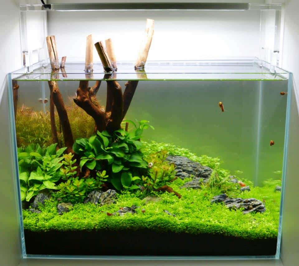 Aquascaping My Fish