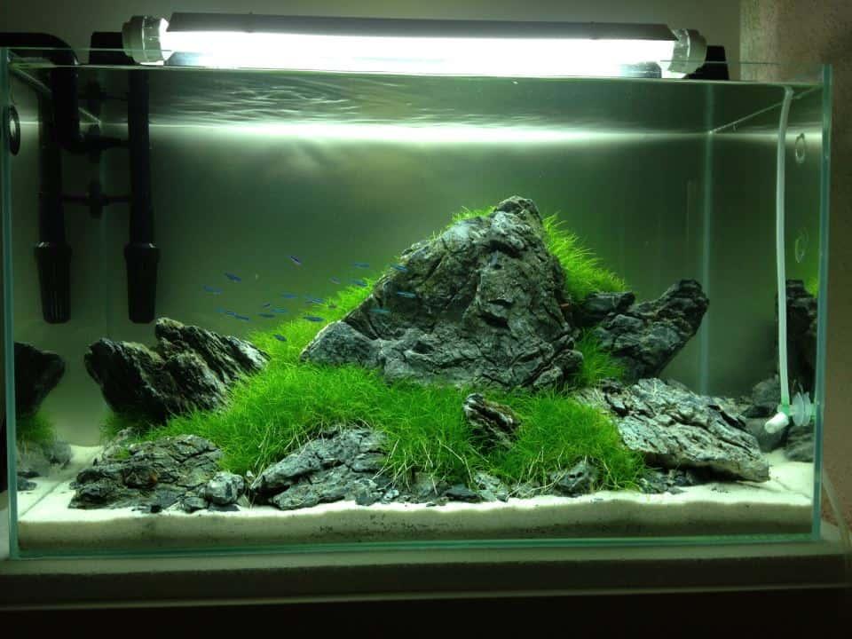 aquascaping my fish. Black Bedroom Furniture Sets. Home Design Ideas