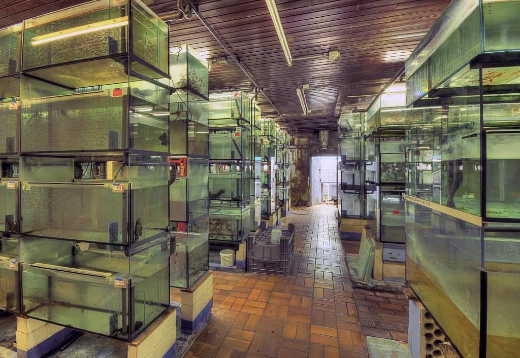 Besuch bei Aquarium Dietzenbach