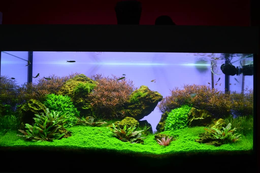 Aquascaping 2015 : Aquascaping Archive - Seite 6 von 7 - my-fish