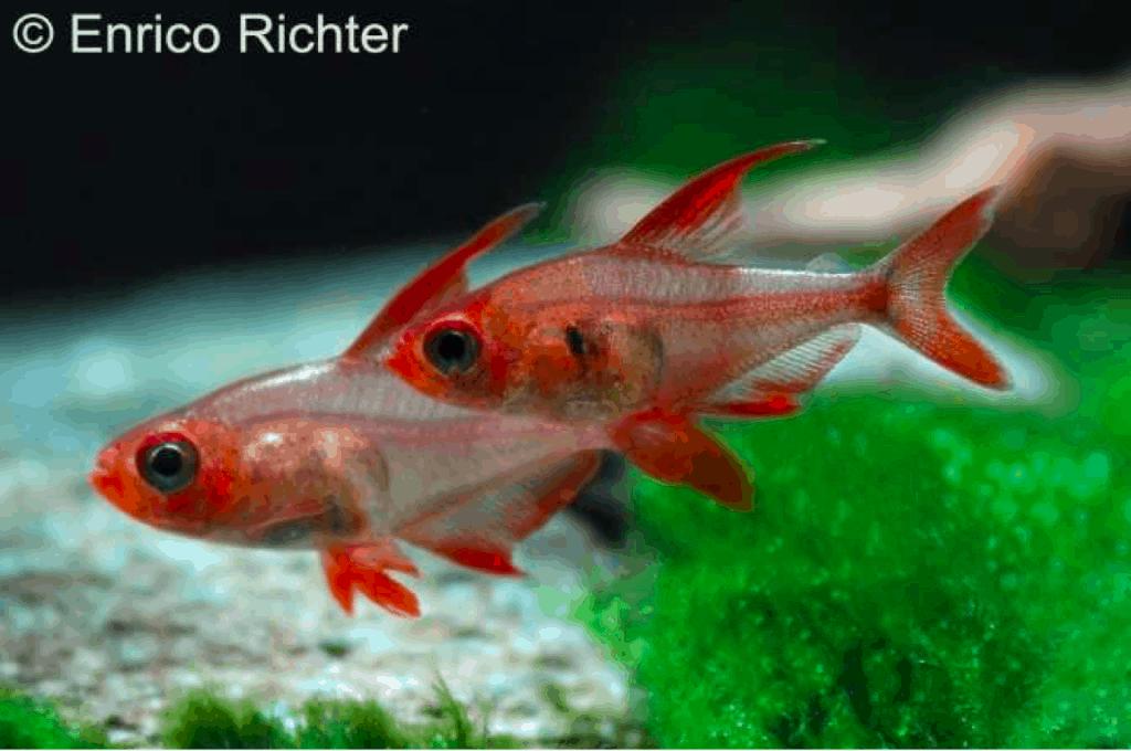 Rarit?ten & Neuimporte im Fokus 30 - my-fish