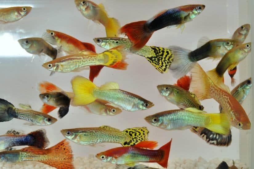 Interessante Fischgruppen