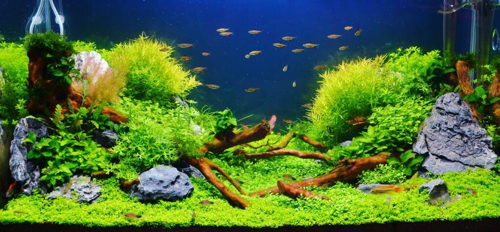 unterwasserwelt im wohnzimmer au ergew hnliche aquarien f r individuelle anspr che my fish. Black Bedroom Furniture Sets. Home Design Ideas