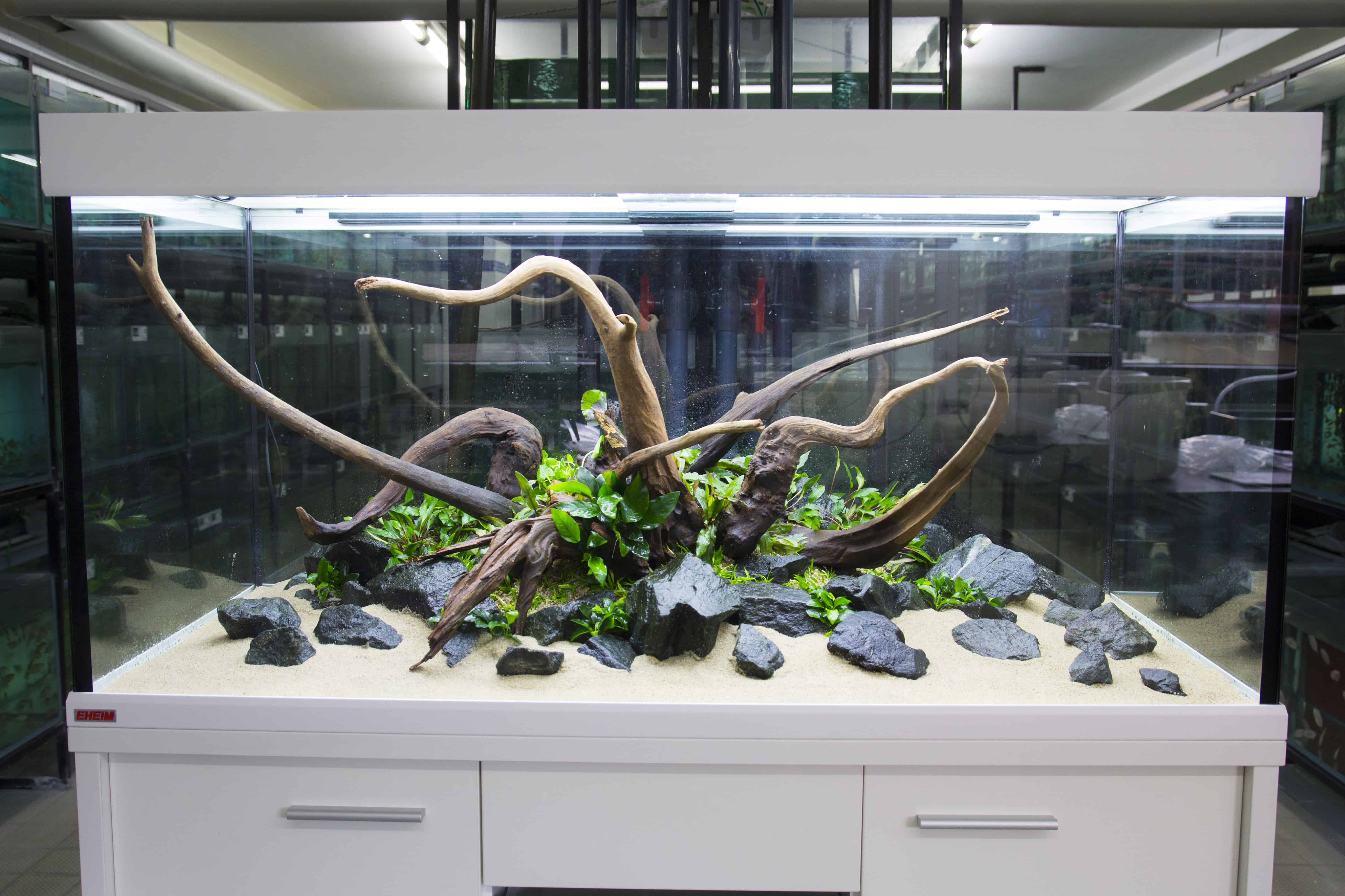 450 liter diskus aquariengestaltung aquascaping. Black Bedroom Furniture Sets. Home Design Ideas