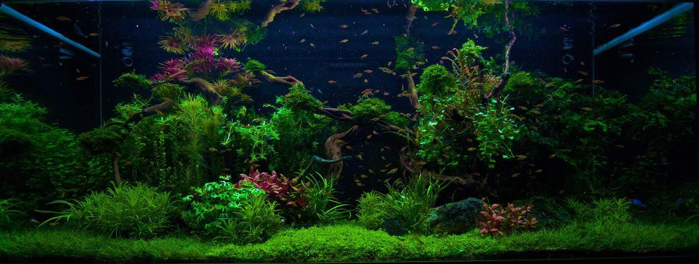 Wasserpflanzen, Auswahl und Pflege   my fish