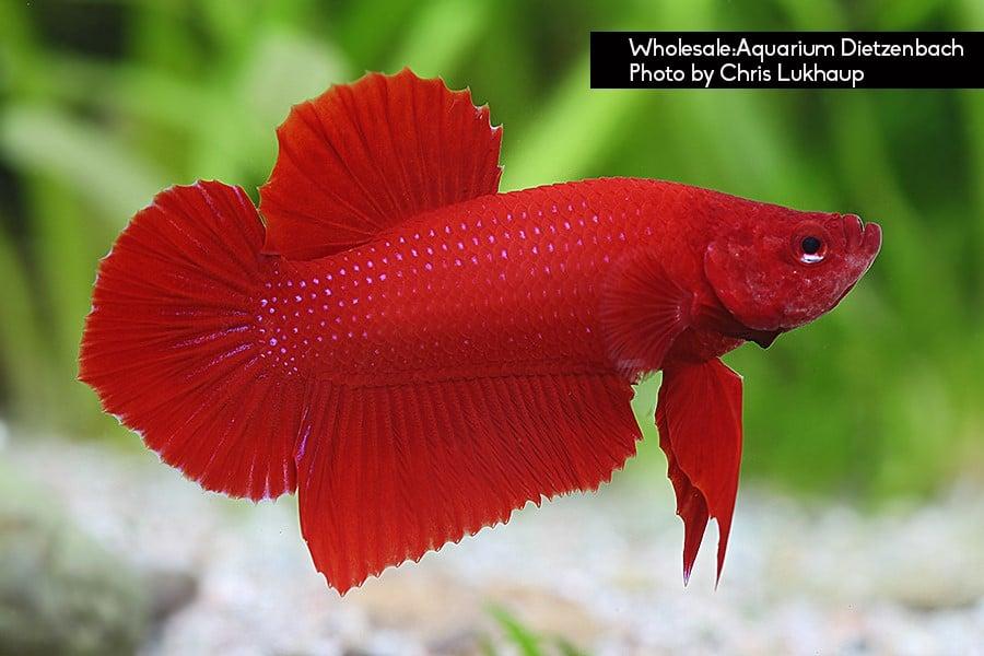 Plakat rot Quelle: Aquarium Dietzenbach Herbert Nigl