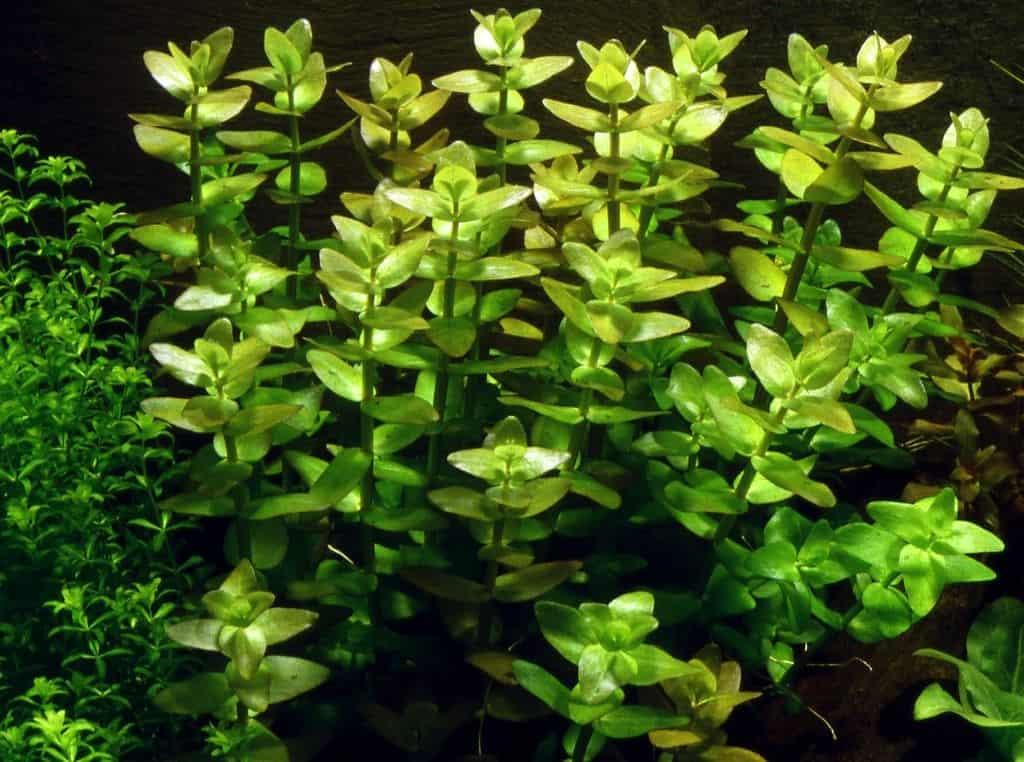 Pflanzen für den Hintergrund 1