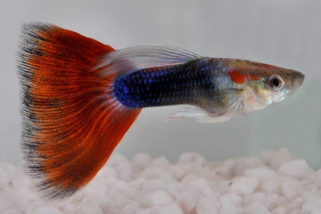 my-fish's Weblink-Empfehlungen 1-2014 2