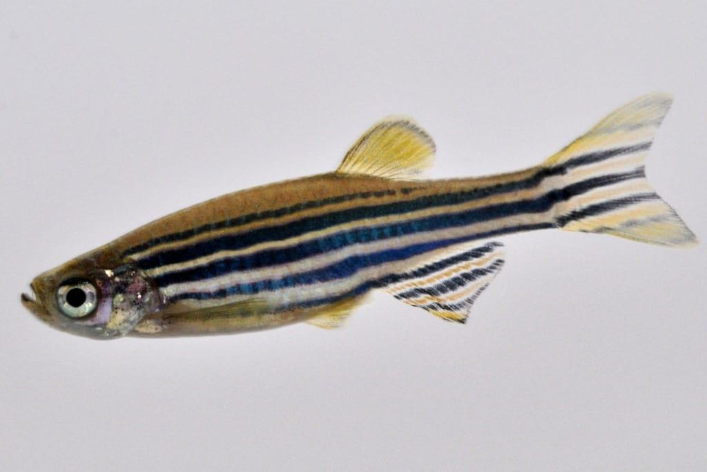 Verbreitungskarte und Fischentwicklung in der Erdgeschichte 48