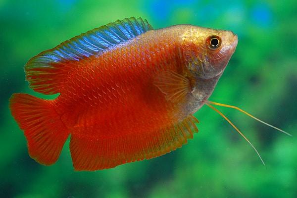 Der faszinierende Körperbau der Fische 10