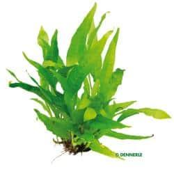 Passende Pflanzen 5