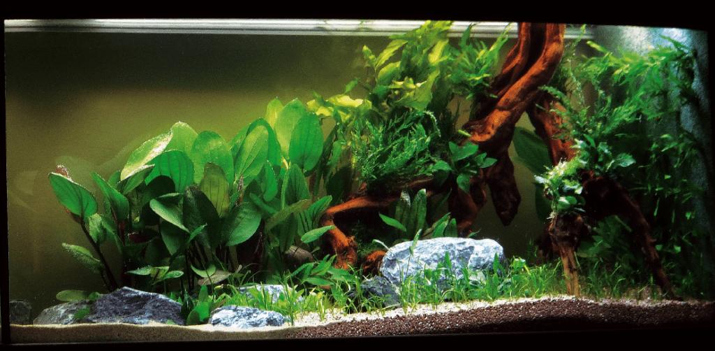 Aquascaping und Diskusfisch2