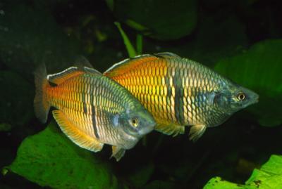 Verbreitungskarte und Fischentwicklung in der Erdgeschichte 61