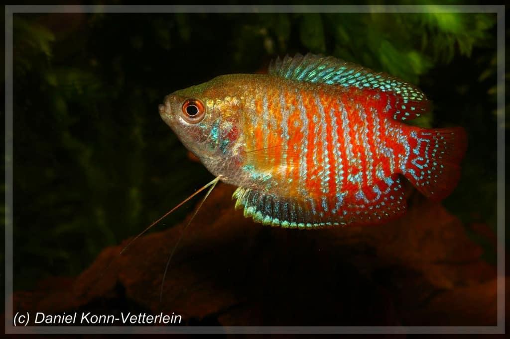 Verbreitungskarte und Fischentwicklung in der Erdgeschichte 44