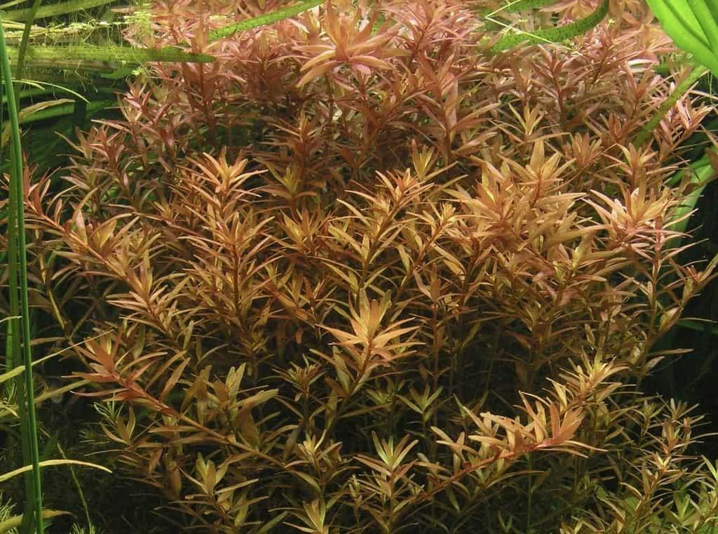 Pflanzen für den Hintergrund 11