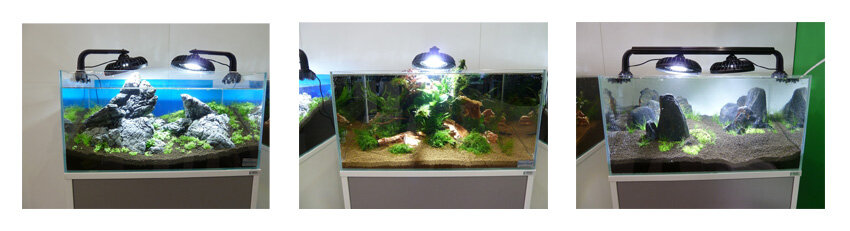 my-fish auf der Interzoo 2012 3