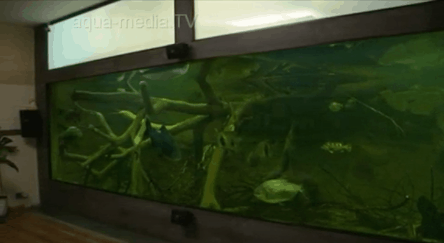 105.000 Liter Amazonas in Thüringen 1