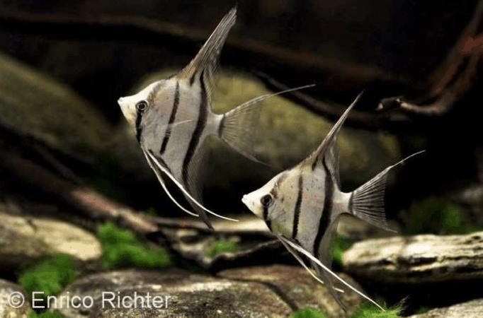 Steckbriefe beliebter Aquarienbewohner 2