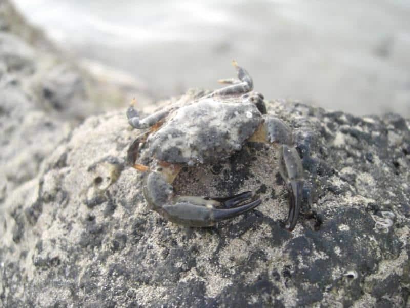Aquarianer im Urlaub - Überall ist das Hobby 9