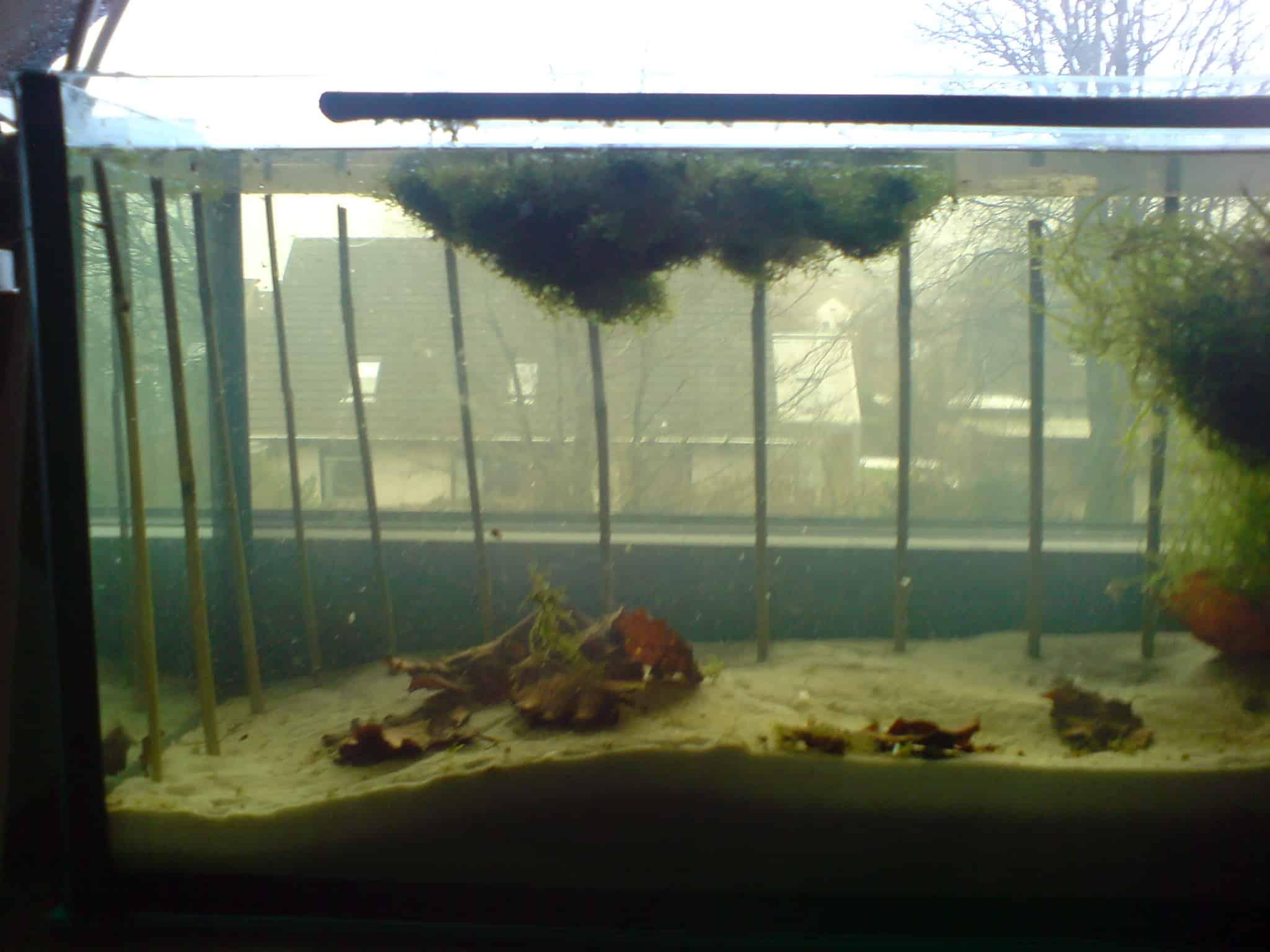 Ruckwand Aus Javamoos Erstellen My Fish
