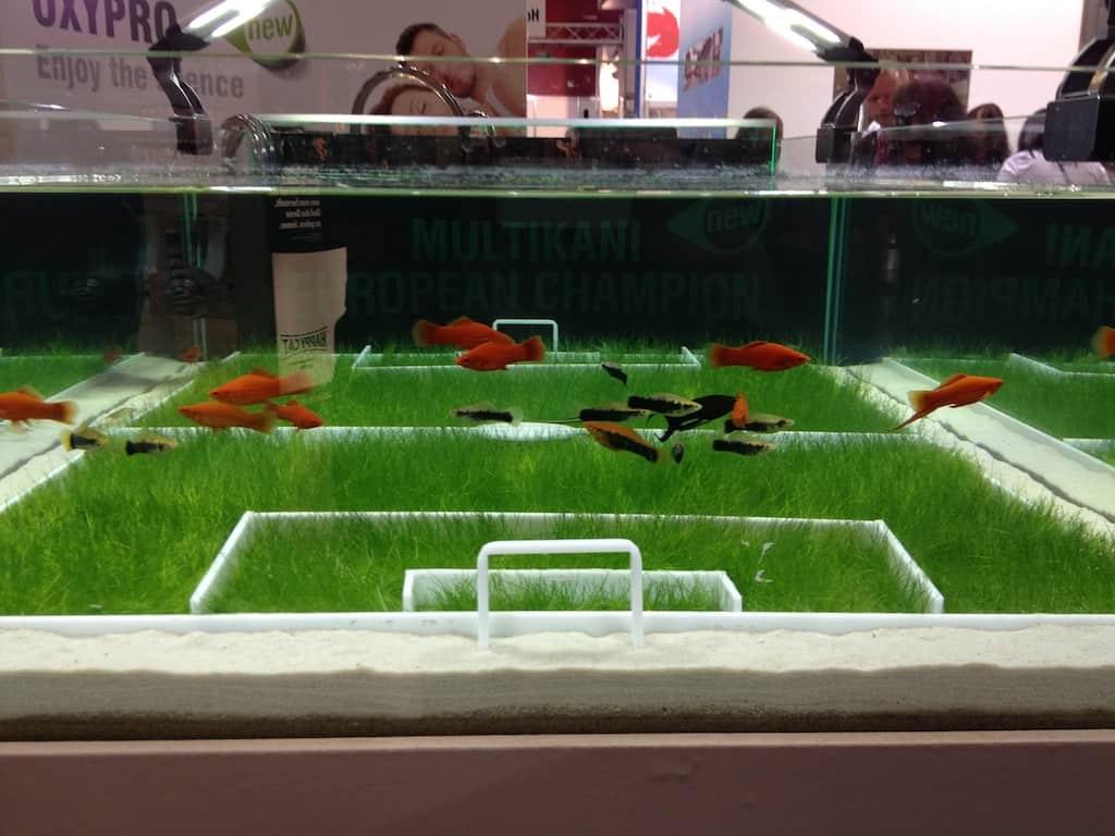 my-fish auf der Interzoo 2012 4