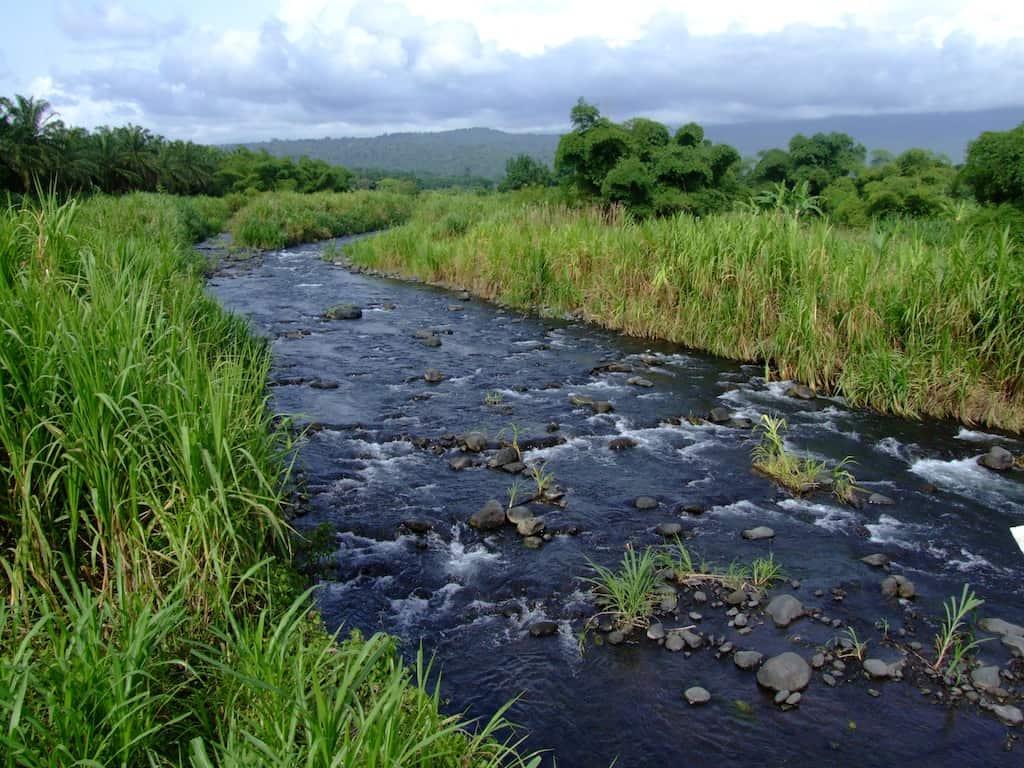 Flüsse und Seen - die Heimat unserer Fische & Wirbellosen 6