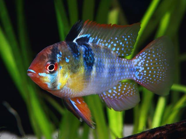 Interessante fischgruppen my fish for Kleine zierfische
