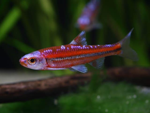 Quelle: Aquarium Dietzenbach