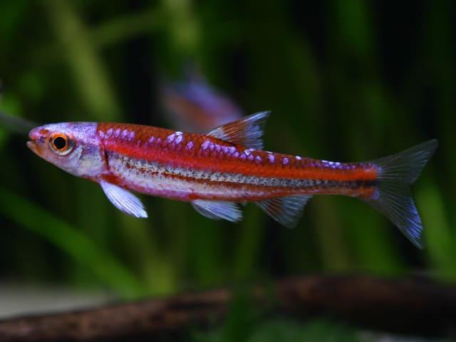 Verbreitungskarte und Fischentwicklung in der Erdgeschichte 4