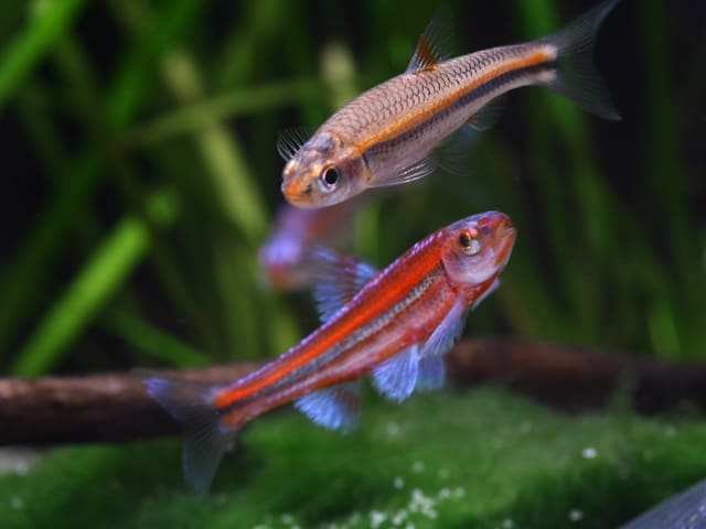 Verbreitungskarte und Fischentwicklung in der Erdgeschichte 5