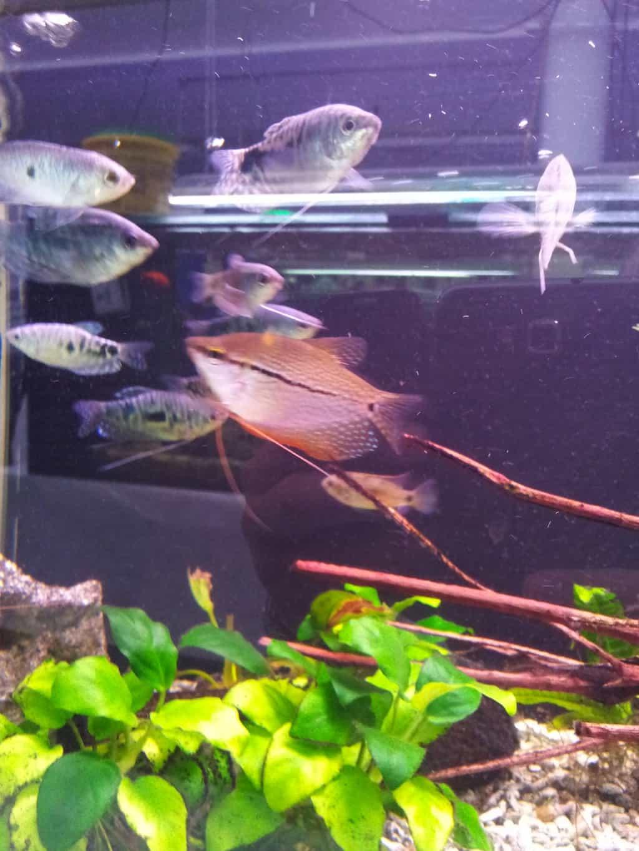Fischwerkstatt 8
