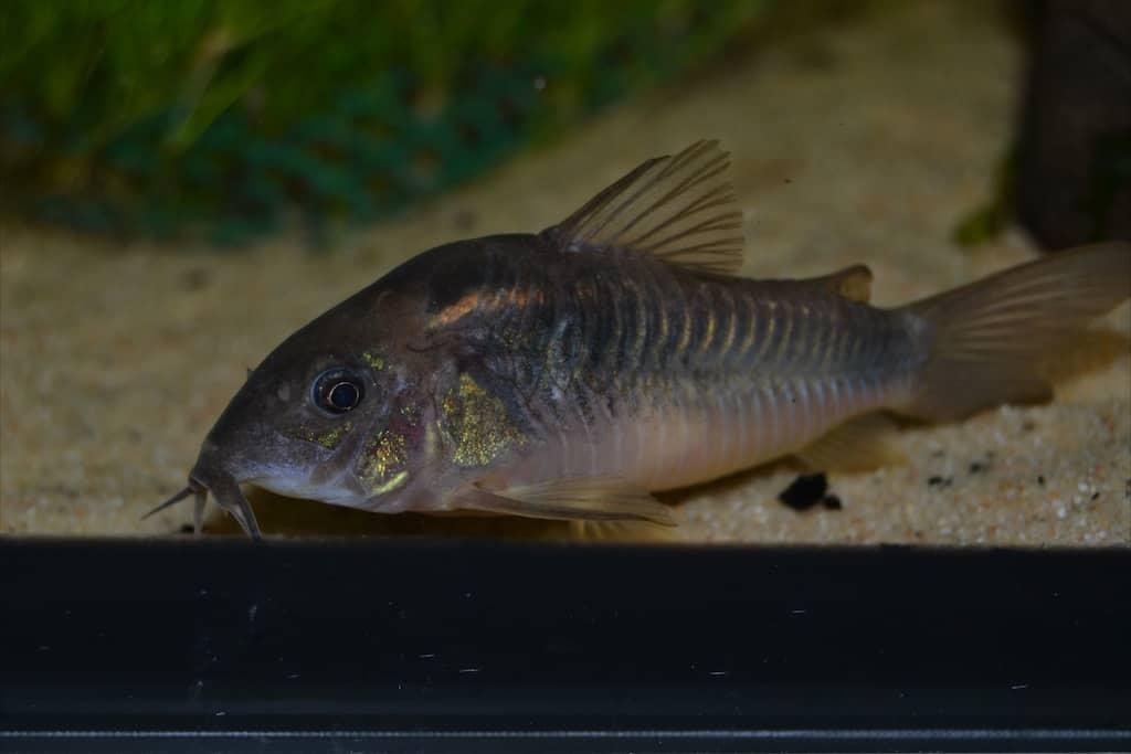 Fischwerkstatt 12