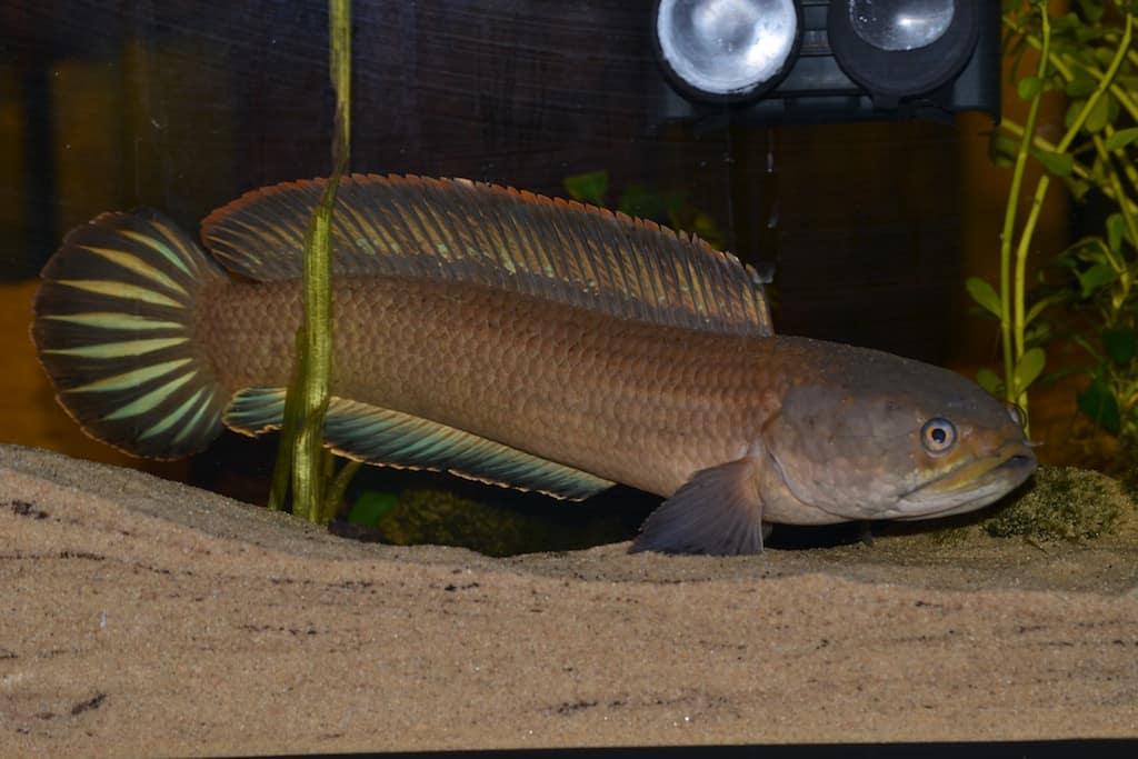 Fischwerkstatt 13