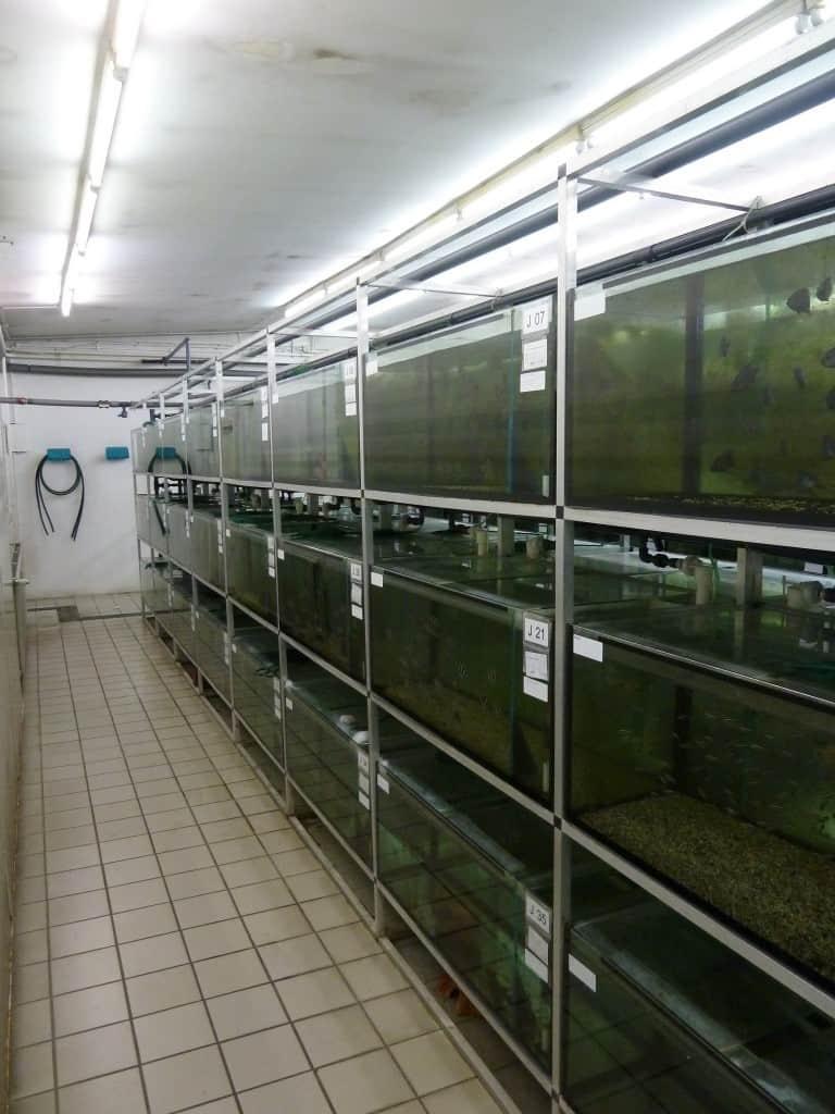 my-fish zu Besuch bei Zierfischgroßhandel Peter Merz 3