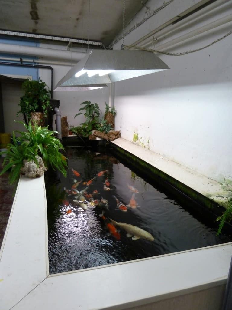 my-fish zu Besuch bei Zierfischgroßhandel Peter Merz 5