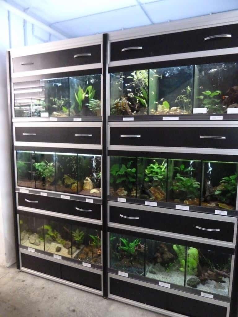 my-fish zu Besuch bei Zierfischgroßhandel Peter Merz 4
