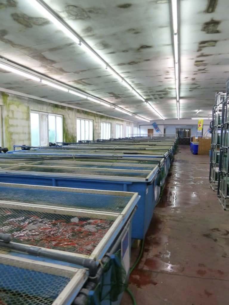 my-fish zu Besuch bei Zierfischgroßhandel Peter Merz 6