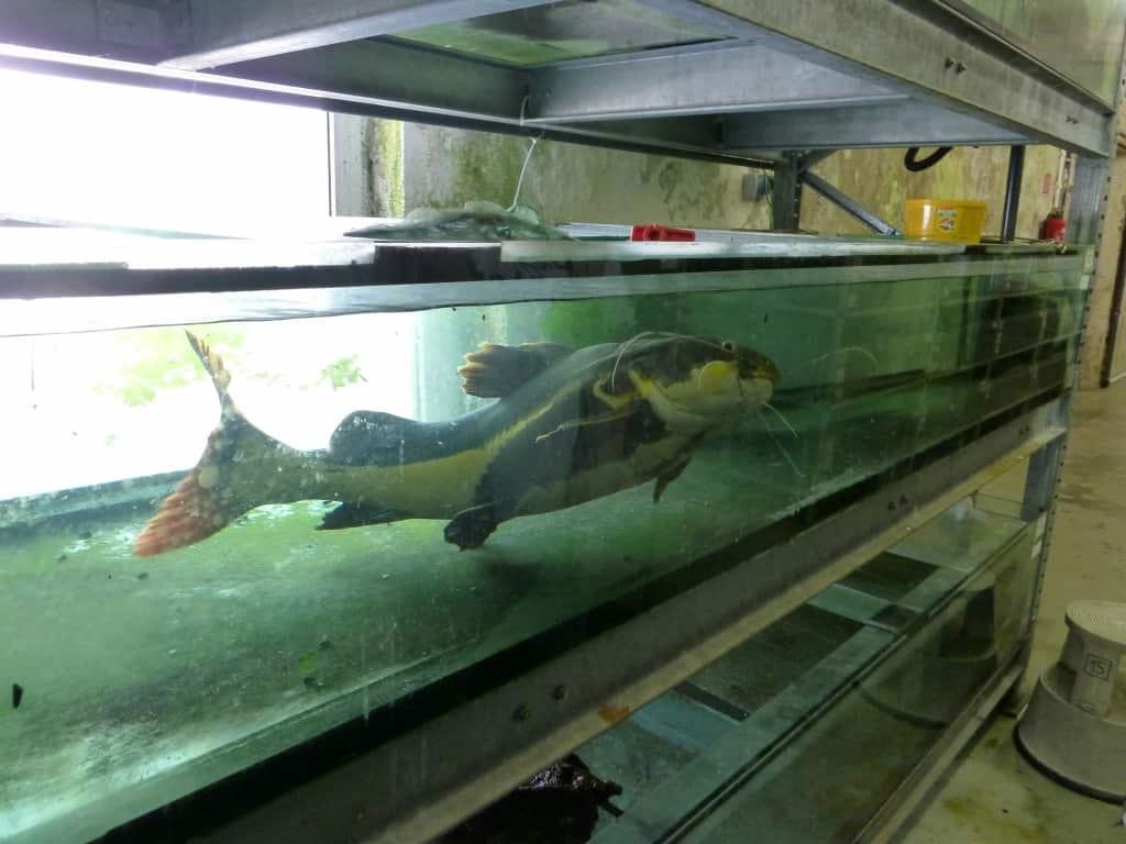 my-fish zu Besuch bei Zierfischgroßhandel Peter Merz 7