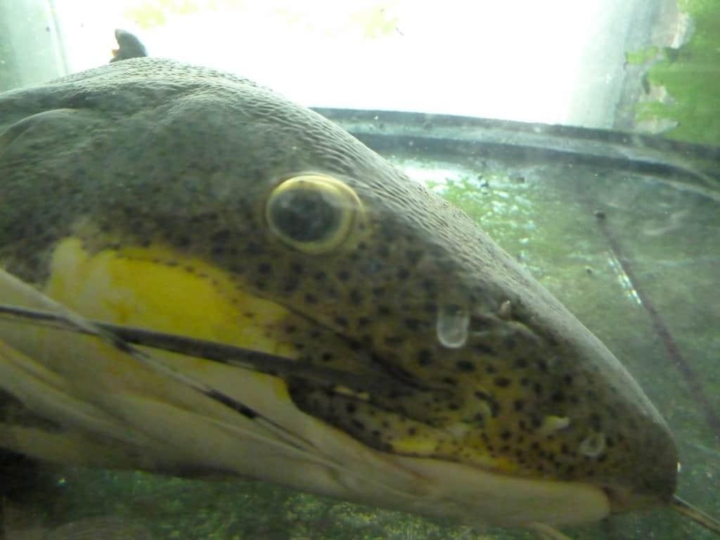 my-fish zu Besuch bei Zierfischgroßhandel Peter Merz 8