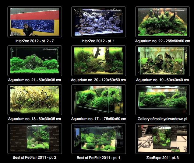 Definite Aquascape TV 1