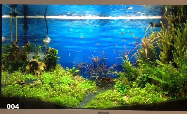 Update  Zookauf Aquarien Einrichtungsmeisterschaft 2012   my fish