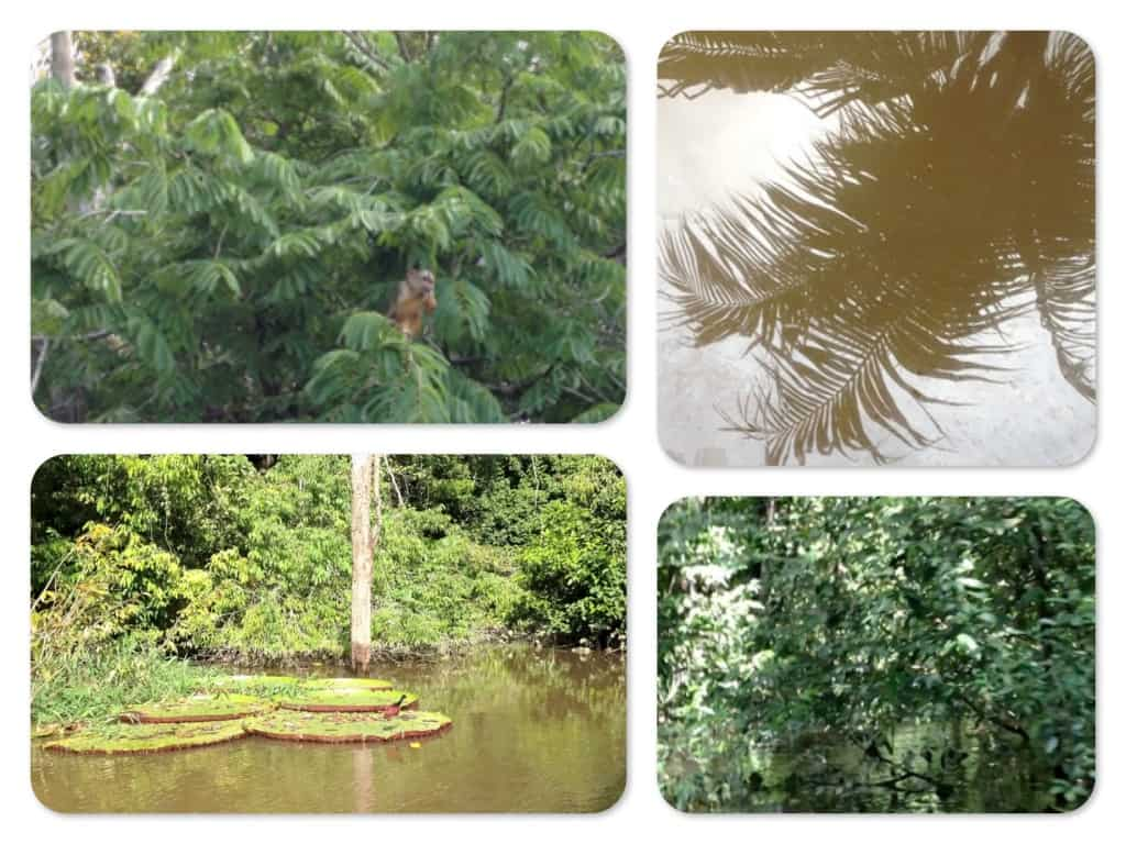 Der Natur auf der Spur in Brasilien - Video Tagebuch 1 1