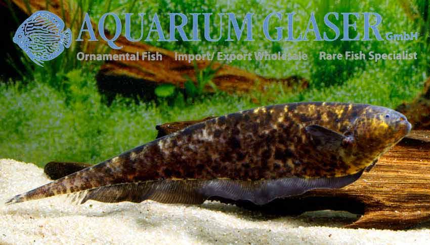 my-fish zu Besuch bei Aquarium Glaser 3