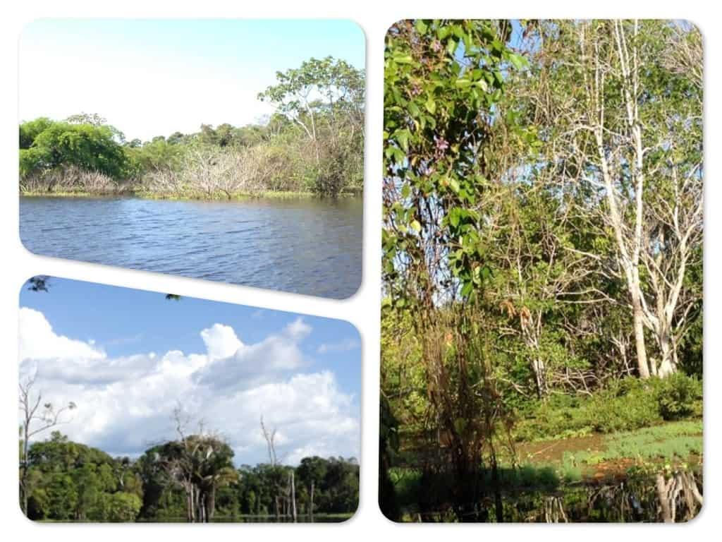 Der Natur auf der Spur in Brasilien - Video Tagebuch 3 1