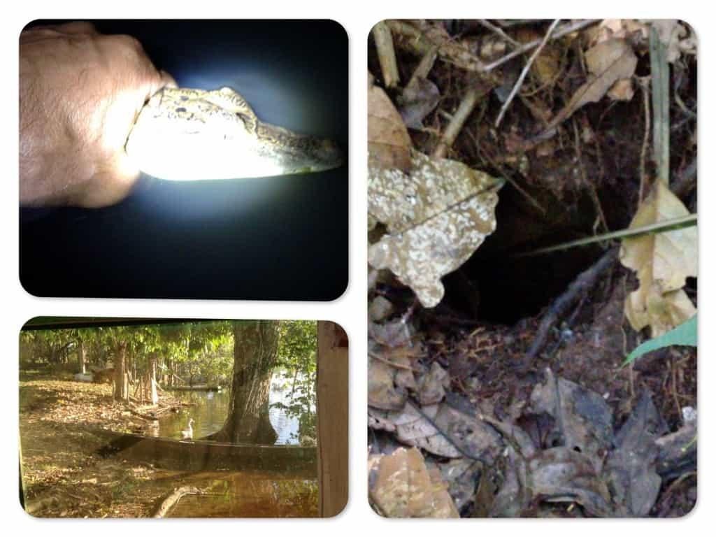 Der Natur auf der Spur in Brasilien - Video Tagebuch 4 1