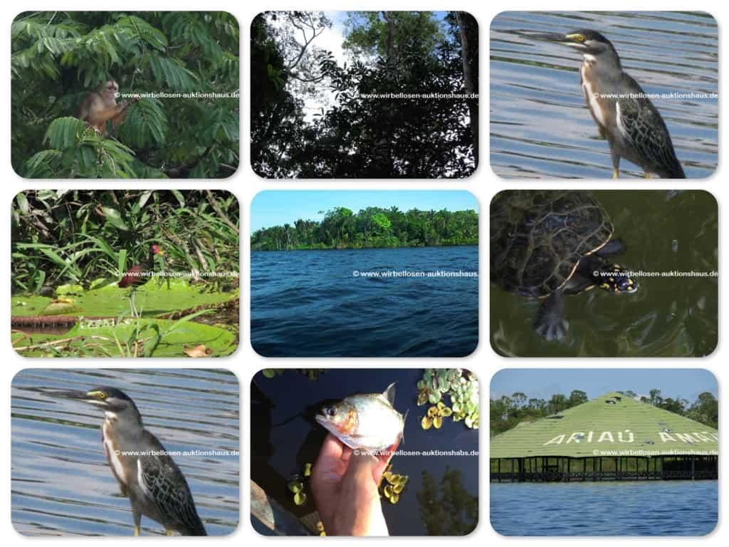Naturexpedition in Brasilien 1