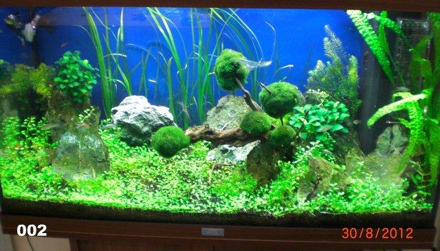 Aquarien archive seite 2 von 2 my fish for Aquarium einrichtungsideen