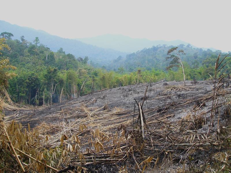 Schlechte Aussichten für den Regenwald 2