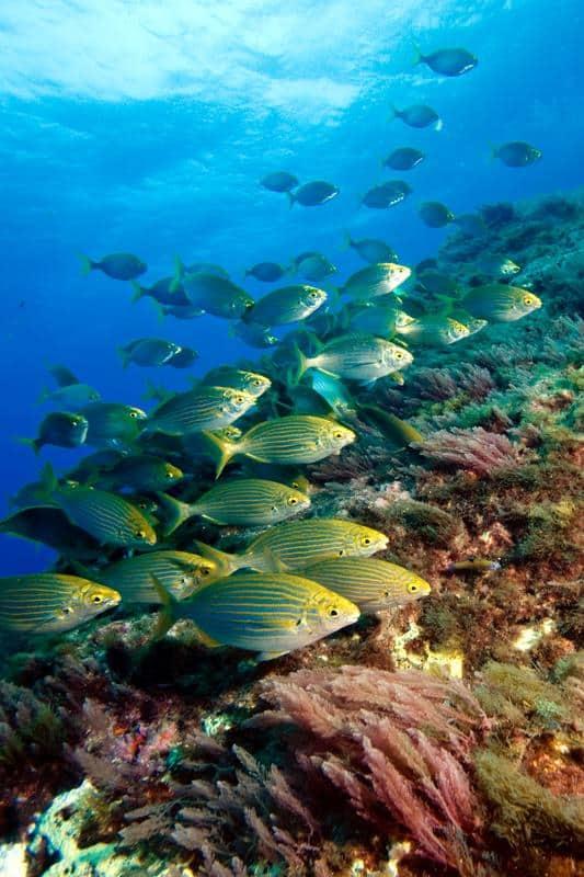 Unterwasserwelt in 3D: Jacobs-Forscher testen neues Kamerasystem in den Küstengewässern der Azoren 2